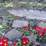 springtime flowers amongst stepping stones
