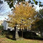 obelisk and autumn tree