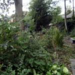 summer shrubs